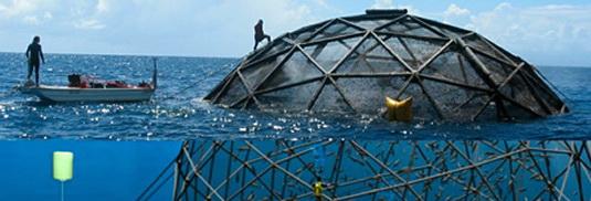 Žuvies pramonė atviroje jūroje | Plaukiantys kupolas